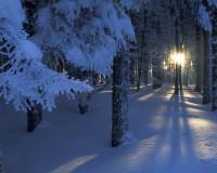 В Смоленском лесу заблудилась маленькая девочка