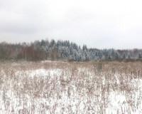 Жительница Москвы заплатит штраф за зарастающие земли в Смоленской области
