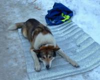 Смолянка спасла собаку, которую сбила машина (фото)