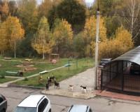 """Своры собак продолжают """"кошмарить"""" жителей Промышленного района"""