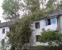 В области тяжелое дерево пробило крышу двухэтажки
