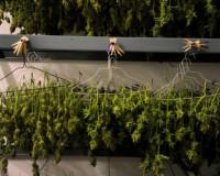 48-летний мужчина выращивал на своем участке коноплю