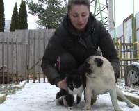 В закрытом вольере заживо сгорела собака (видео)