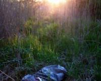 В Смоленской области нашли тело молодого парня