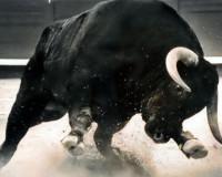 Разъяренный бык-убийца растерзал пенсионера