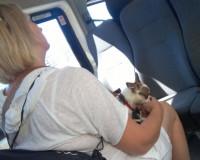 Поведение дама с собачкой возмутило смолянку (фото)