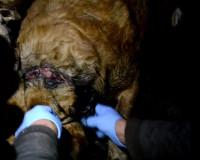 Добровольцы спасли собак, над которыми издевалась смолянка (видео)