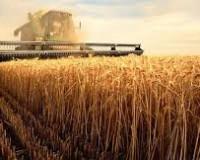 На развитие сельского хозяйства Смоленщина получит более 48 миллионов рублей