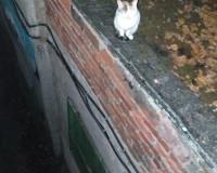 Фото: На помощь кошке, просидевшей безвылазно на крыше несколько дней, пришли спасатели