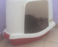 Фото: в Новосельцах породистого кота вышвырнули в подъезд вместе с лотком