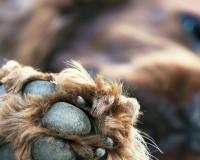 В Смоленске неизвестные оставили обездвиженную собаку на произвол судьбы