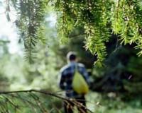 В Ельнинском лесу заблудился мужчина