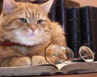 В Смоленске есть кот соблюдающий ПДД! (Видео)