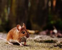 В смоленской многоэтажке мышь покусала ребёнка