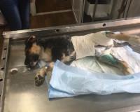 В Гагарине живодер избил бездомного щенка (фото)