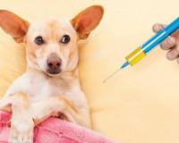В Смоленске утвердили график вакцинации животных от бешенства
