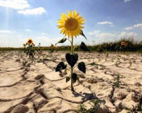 Синоптики допустили риск засухи на Смоленщине