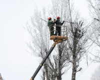 В Смоленске улицу Кутузова ждет озеленение