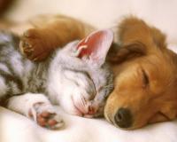 В России будут регистрировать домашних животных