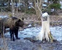 В Смоленской области медведи вышли из спячки