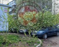 В Смоленске из-за сильного ветра упали деревья
