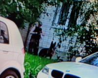 В Смоленске овчарка напала на местную жительницу