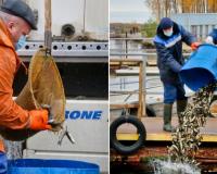 В водохранилище смоленской АЭС выпустят более 640 тысяч особей рыб
