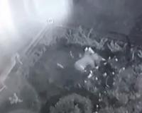 В Смоленске камеры засняли наглых разорителей клумб (видео)