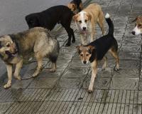 Жители Смоленщины рассказывают о неком мужчине, который отстреливает собак