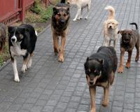 В Заднепровском районе свора агрессивных собак едва не порвала на куски женщину