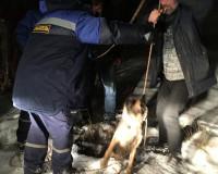 Фото: Спасатели вытащили собаку, которая провалилась в колодец