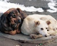 В Смоленска вновь активизировались догхантеры