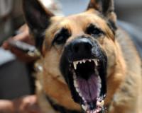 Под Смоленском хозяева собаки, укусившей ребенка, выплатят компенсацию в 70 тысяч