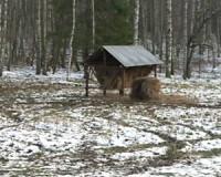 В Вяземский район завезли диких овец из Чехии