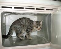 В Смоленской области вора задержали в морозильной камере