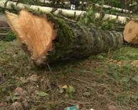 В Смоленском лесопитомнике появится зоосад европейского уровня