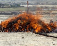 Под Смоленском сожгли 30 килограммов наркотиков