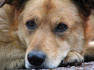 В Смоленске появится собачий приют