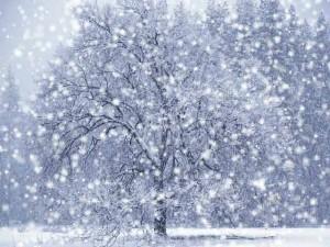 Как в Смоленске будут справляться со снежными заносами этой зимой