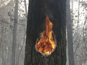 Высокие технологии на страже смоленских лесов