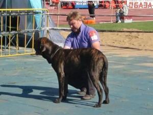 В Смоленске прошла выставка собак всех пород