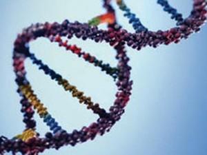 Каким образом стресс разрушает ДНК