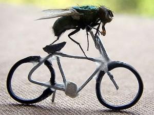 Насколько вредны мухи?