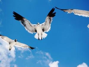 Спасение смоленских птиц волонтерами из Белоруссии и Москвы