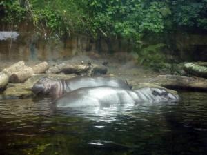 Ночное путешествие по Сингапурскому зоопарку