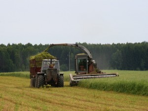 Безработица в Смоленске уменьшится за счет развития производства кормов