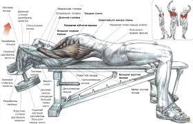 Доступно о мышцах