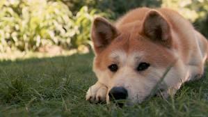 Основные классификации пород собак