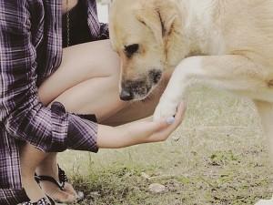 Собаки — лучшие друзья человека