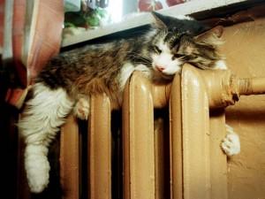 Кто в Смоленске остаётся без тепла: последняя информация